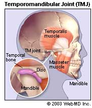 TMJ - Illustration of Temporomandibular Joint
